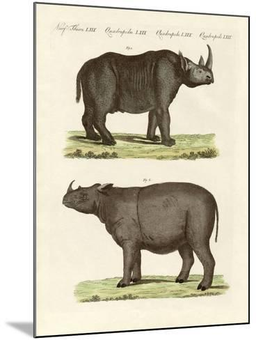 Large Four-Footed Mammals--Mounted Giclee Print