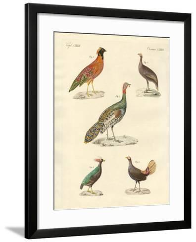 Beautiful Hen-Like Birds--Framed Art Print