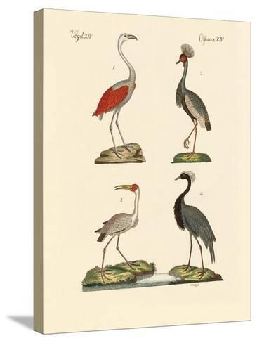 Birds from Hot Countries--Stretched Canvas Print