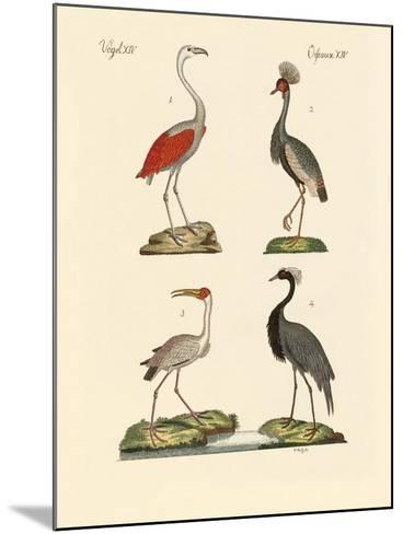 Birds from Hot Countries--Mounted Giclee Print