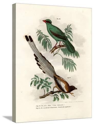 Short-Tailed Green Magpie, 1864--Stretched Canvas Print