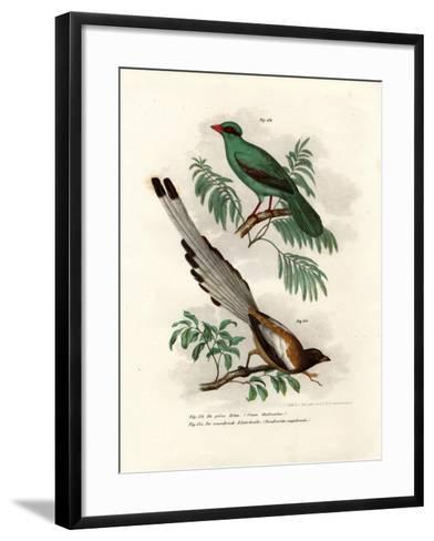 Short-Tailed Green Magpie, 1864--Framed Art Print