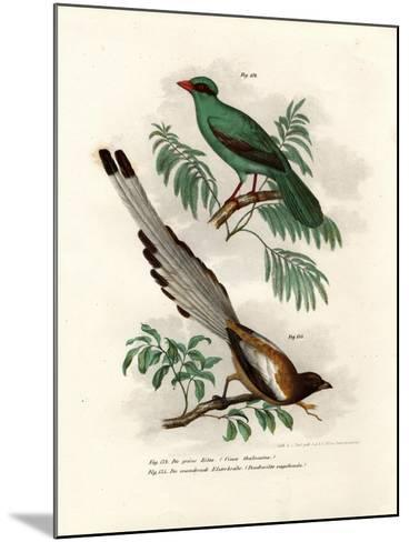 Short-Tailed Green Magpie, 1864--Mounted Giclee Print