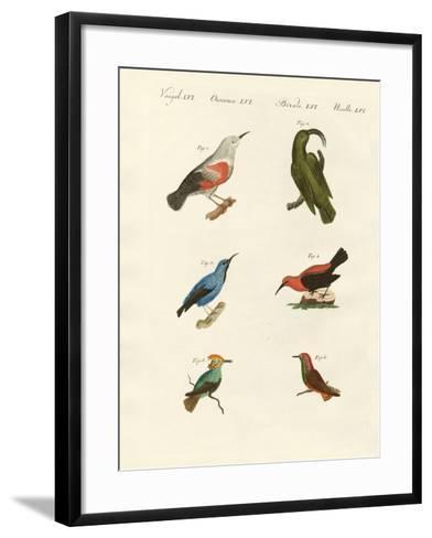 Treecreepers and Hummingbirds--Framed Art Print