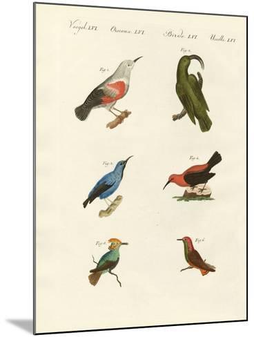 Treecreepers and Hummingbirds--Mounted Giclee Print