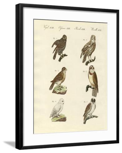 Different Kinds of Foreign Owls--Framed Art Print