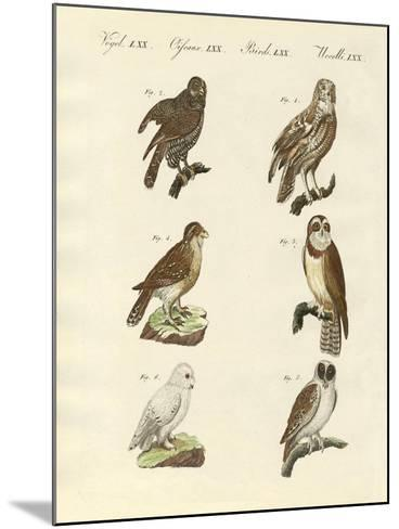 Different Kinds of Foreign Owls--Mounted Giclee Print