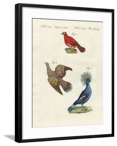 Beautiful, Foreign Pigeons--Framed Art Print