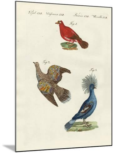 Beautiful, Foreign Pigeons--Mounted Giclee Print