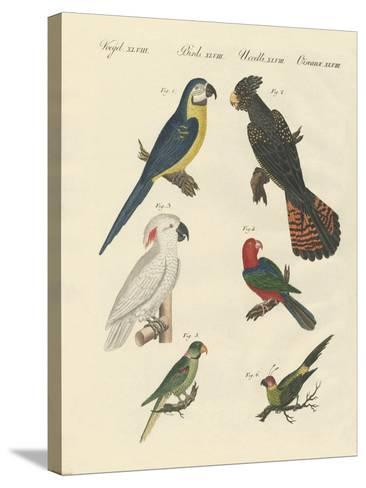 Different Kinds of Parrots--Stretched Canvas Print