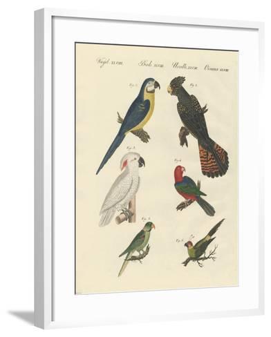 Different Kinds of Parrots--Framed Art Print