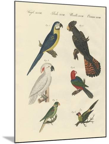Different Kinds of Parrots--Mounted Giclee Print