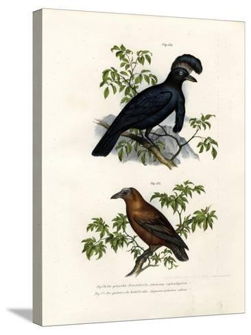 Amazonian Umbrellabird, 1864--Stretched Canvas Print