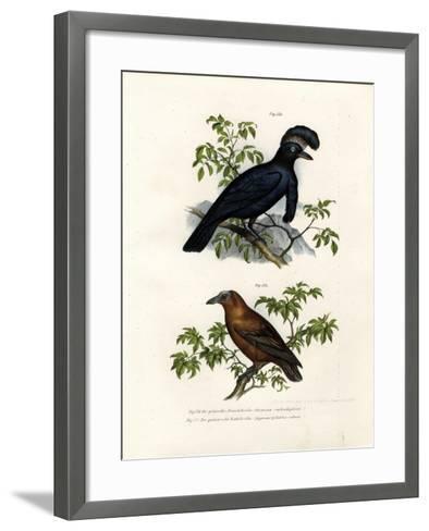 Amazonian Umbrellabird, 1864--Framed Art Print