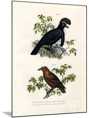 Amazonian Umbrellabird, 1864--Mounted Giclee Print
