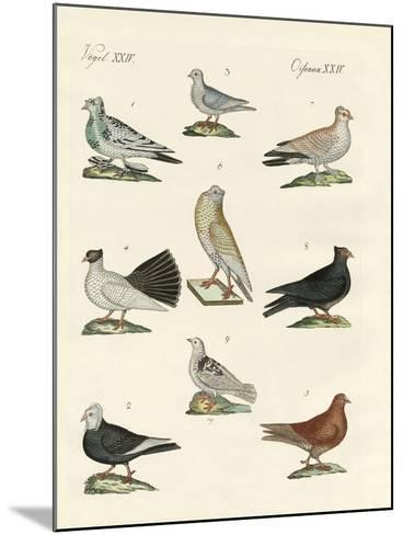 Different Kinds of Pigeons--Mounted Giclee Print