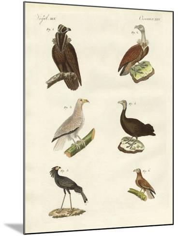 Different Kinds of Raptors--Mounted Giclee Print