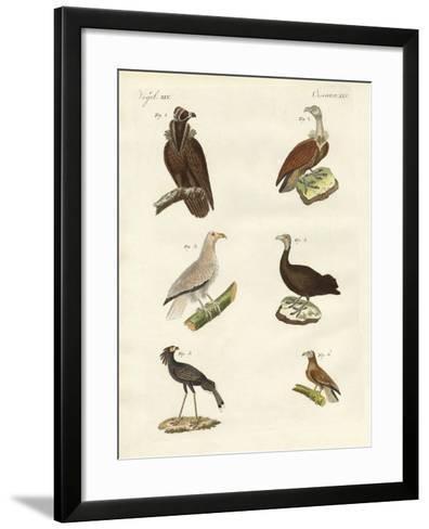 Different Kinds of Raptors--Framed Art Print