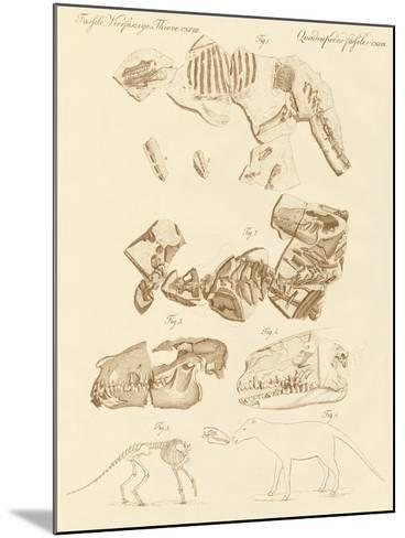 Strange Fossils of Four-Footed Animals--Mounted Giclee Print