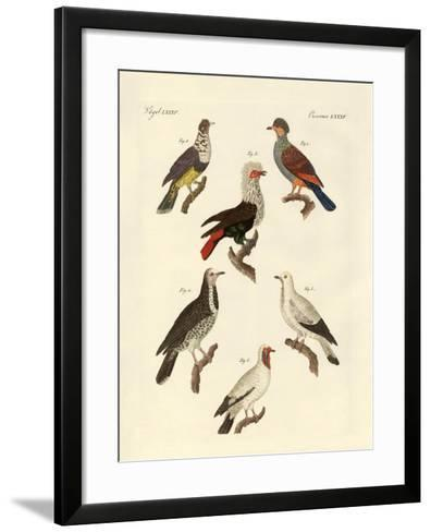 Different Kinds of Foreign Pigeons--Framed Art Print