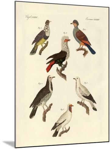 Different Kinds of Foreign Pigeons--Mounted Giclee Print