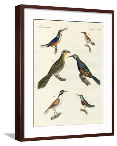 Rare Foreign Kinds of Treecreepers--Framed Art Print