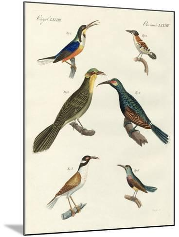 Rare Foreign Kinds of Treecreepers--Mounted Giclee Print