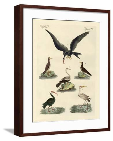 Strange Marsh-Birds and Waterbirds--Framed Art Print