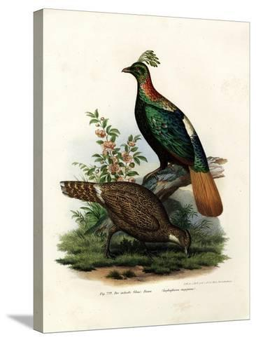 Himalayan Monal Pheasant, 1864--Stretched Canvas Print