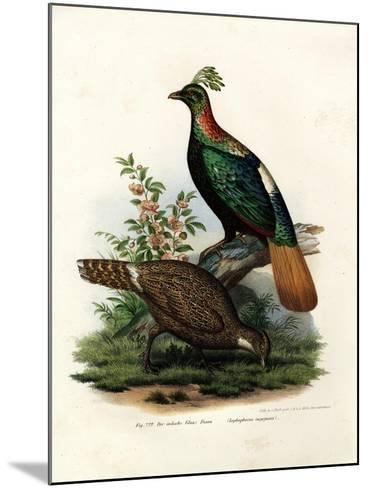 Himalayan Monal Pheasant, 1864--Mounted Giclee Print