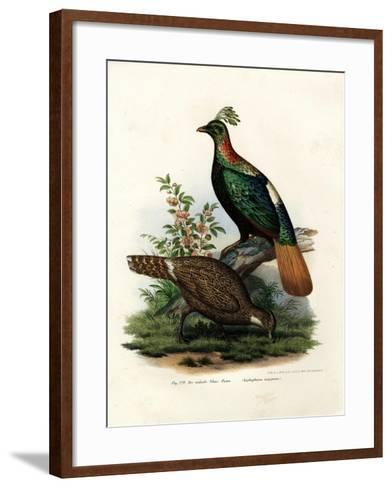 Himalayan Monal Pheasant, 1864--Framed Art Print