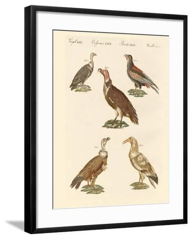 African and Asiatic Vultures--Framed Art Print