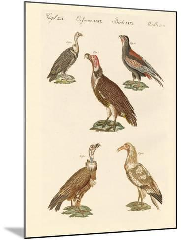 African and Asiatic Vultures--Mounted Giclee Print