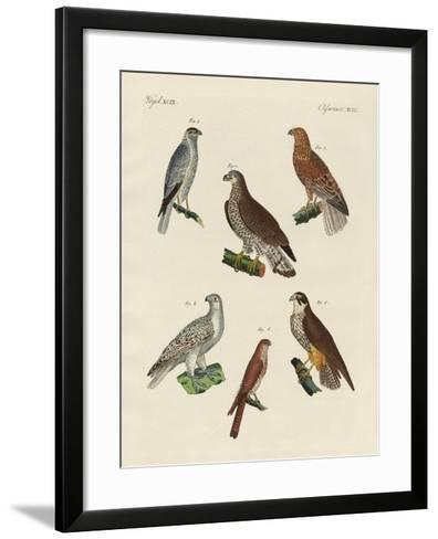 Excellent Hawks of Germany--Framed Art Print