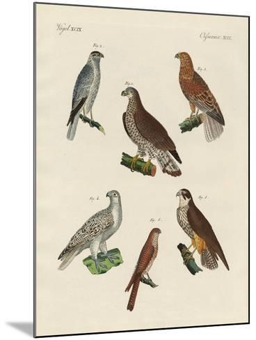 Excellent Hawks of Germany--Mounted Giclee Print