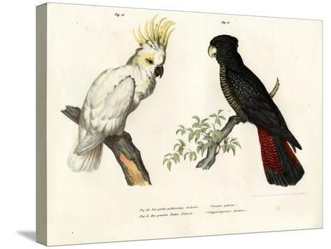 Sulphur-Crested Cockatoo, 1864--Stretched Canvas Print