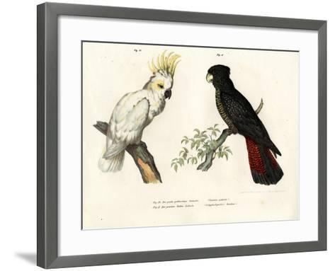 Sulphur-Crested Cockatoo, 1864--Framed Art Print