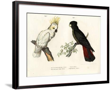 Sulphur-Crested Cockatoo, 1864--Framed Art Print