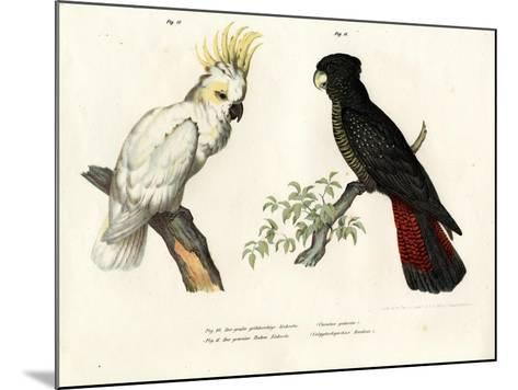 Sulphur-Crested Cockatoo, 1864--Mounted Giclee Print