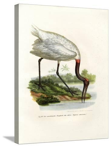 American Wood Ibis, 1864--Stretched Canvas Print