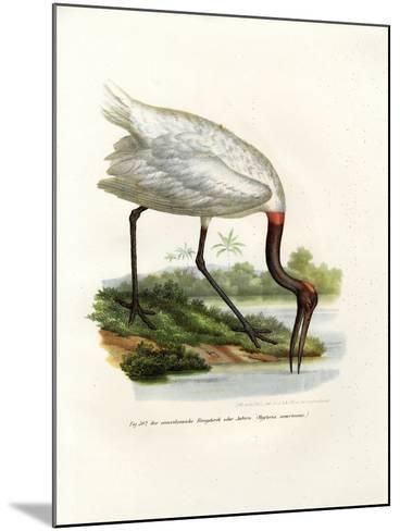 American Wood Ibis, 1864--Mounted Giclee Print