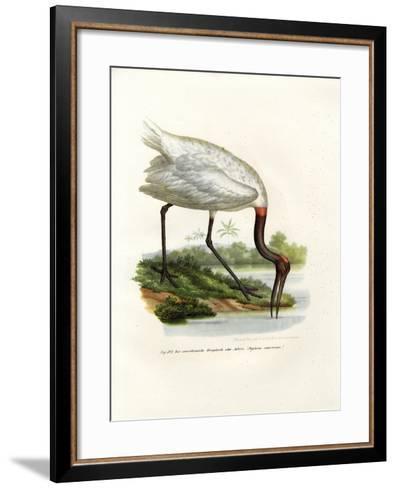 American Wood Ibis, 1864--Framed Art Print