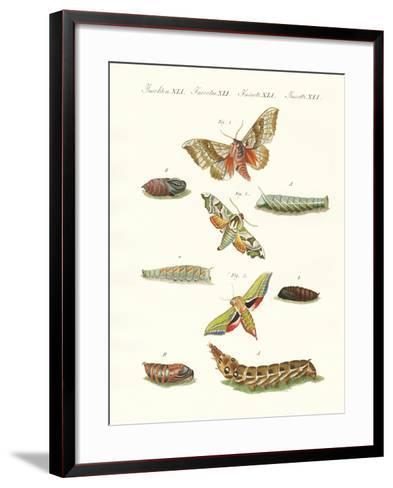 Beautiful German Twilight Butterflies--Framed Art Print