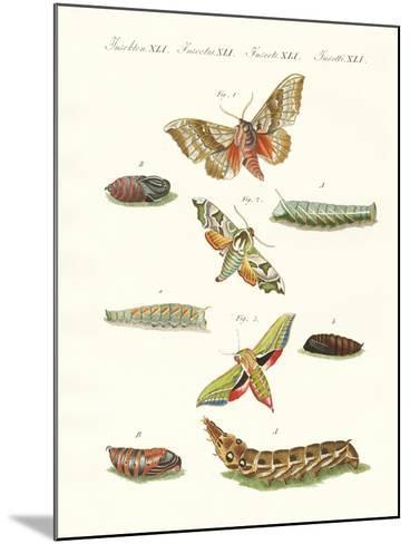 Beautiful German Twilight Butterflies--Mounted Giclee Print