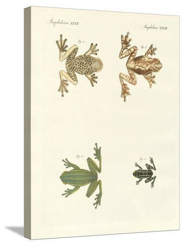 Different Kinds of Foreign Tree Frogs--Stretched Canvas Print