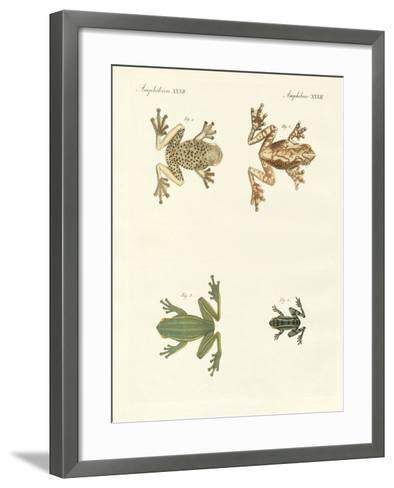 Different Kinds of Foreign Tree Frogs--Framed Art Print
