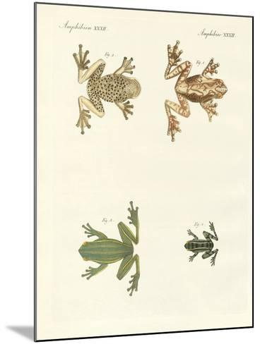 Different Kinds of Foreign Tree Frogs--Mounted Giclee Print