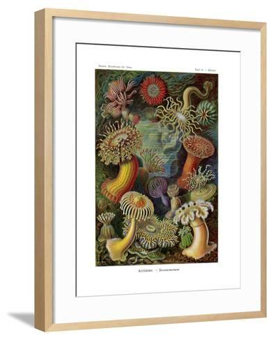 Actiniae or Actiniaria, 1899-1904--Framed Art Print