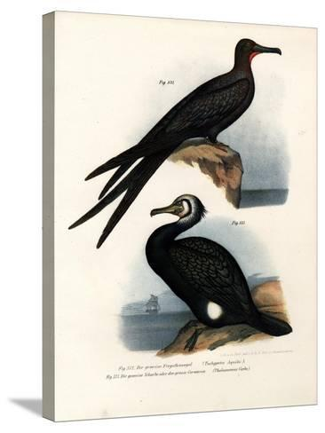 Great Frigate Bird, 1864--Stretched Canvas Print