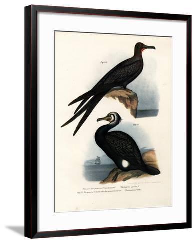 Great Frigate Bird, 1864--Framed Art Print
